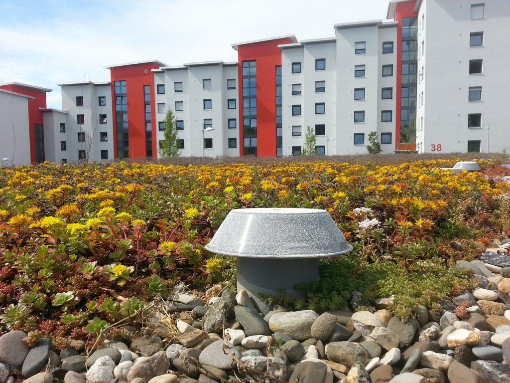Na dachu mogą rosnąć trawy i kwiaty